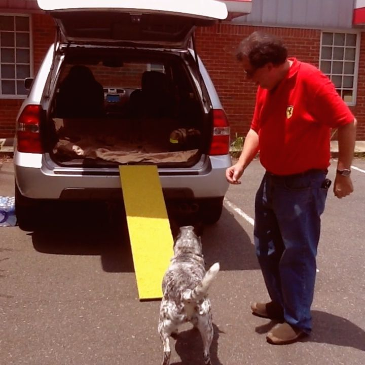 The many uses of the light weight aluminum Travel Plank which is fully rubberized for dog agility practice, canine conditioning & getting in-and-out of vehicles.