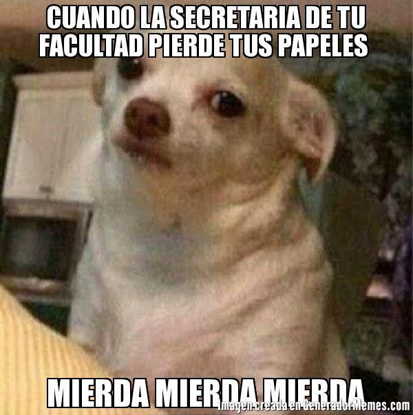 CUANDO LA SECRETARIA DE TU FACULTAD PIERDE TUS PAPELES  MIERDA MIERDA MIERDA  - Meme perro chihuahua enojado