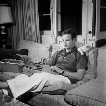 Marlon Brando at the typewriter while his cat keeps him company 1955