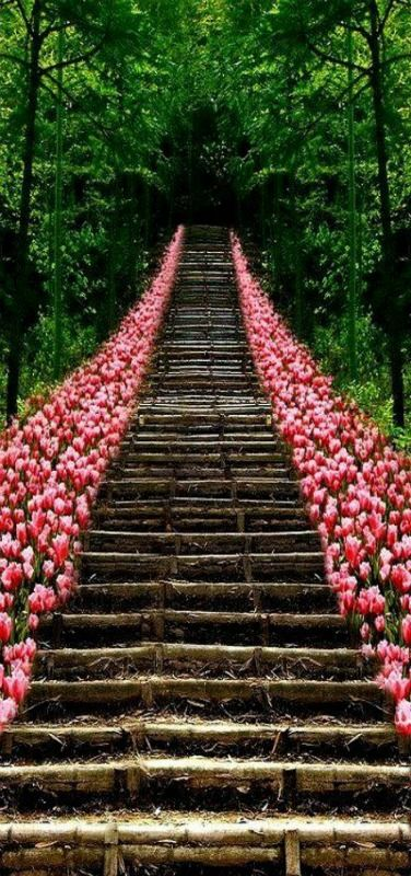 Tulip Stairs, Kyoto, Japan by Andrea Stracuzzi