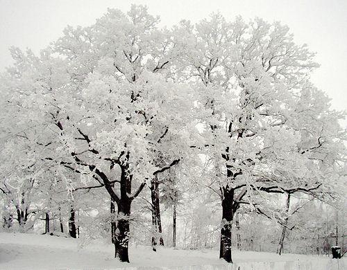 Winter Snow: Winter Beauty, Nature, Winter White, Winter Wonderland, Snow, Beautiful, Trees, Photo