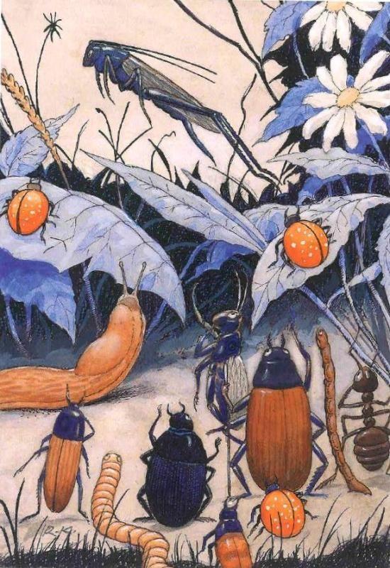 Rudolf Koivu, illustration