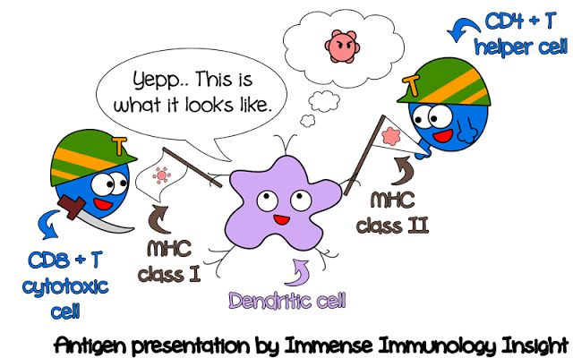 Immense Immunology Insight: Question: Antigen presenting cells display processed antigens to T cells through which MHC molecule?