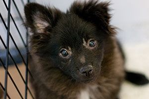 Great tips on Adopting or Fostering a Puppy Mill dog