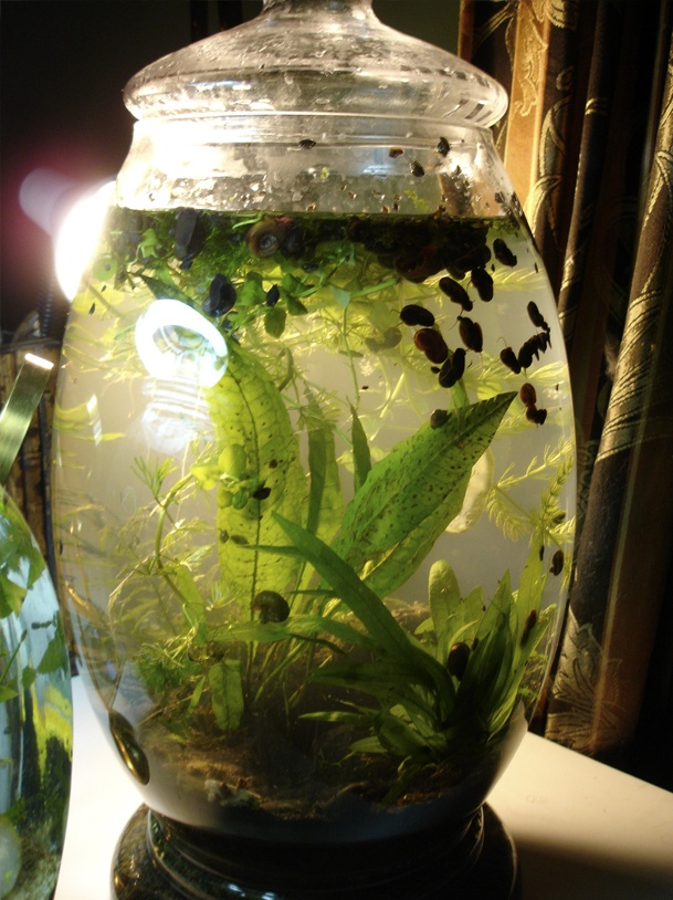 17 best images about terrariums on pinterest jars for Koi pond gift ideas