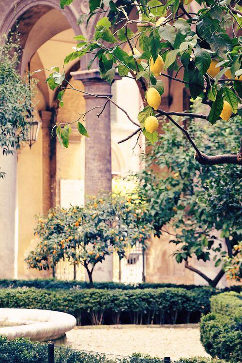 champagne:  doria pamphilj, courtyard detail, lemon trees, pottery, 2012 (digital): Doria Pamphilj, Rome Italy, Formal Gardens, Fruit Trees, Italian Gardens, Lemon Yellow, Lemon Trees, Beautiful Creatures, Lemontrees