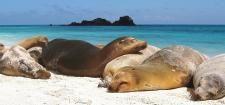 Galapagos Christmas Vacation   Christmas Tours, Adventures - Galapagos Islands