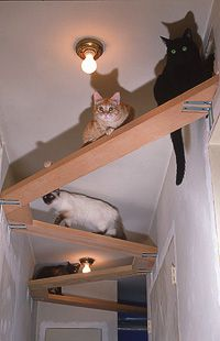 Perfect catification of a hallway.