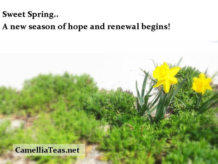 If we treated each day with the marvel of spring, its hope and potential - our lives would be in a constant state of renewal and improvement!