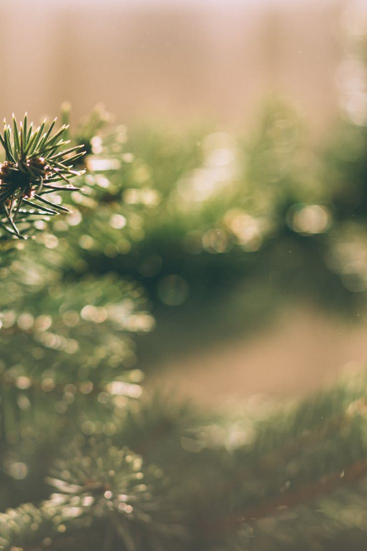 Free stock photo of winter, blur, tree, green