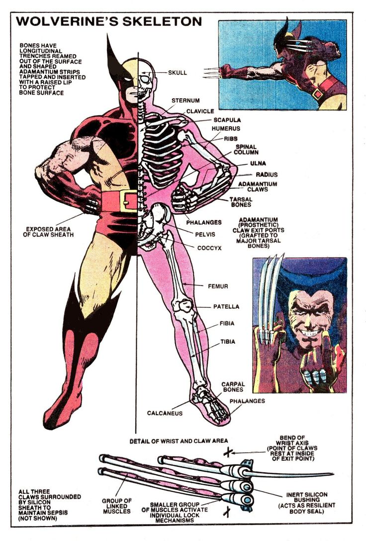 Interesting diagram of Wolverine's Skeleton from The Official Handbook of The Marvel Universe #15 (1984)