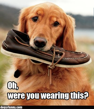 Oh, were you wearing this?