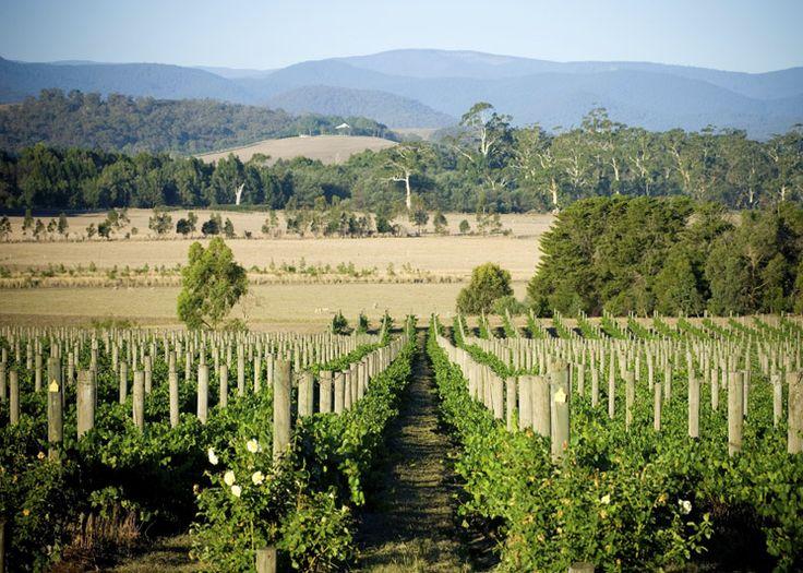 Domaine Chandon | Yarra Valley, Victoria, Australia