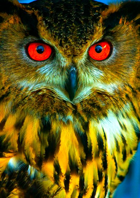 Just fascinated by how many different types of owl's there are....and some really gorgeous, colorful one's