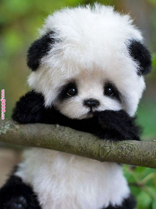 Pin by Barbara Beckers on Cute Pinterest Cute animals