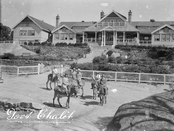 Govt Chalet, Mt. Buffalo, Victoria.  The donkeys at Buffalo were cared for Mick Dougherty the famous coach driver, who in 1919 was forced to retire from driving coaches to Omeo and to Buffalo, for Crawford & Co, due to an accident when he broke his ankle (no good for pushing on the brakes). Mick was one of the oldest and longest serving coach drivers. Mick who loved the horses he had control over, commented after working with donkeys he preferred them to horses.