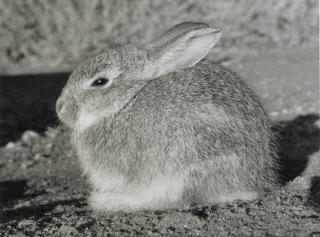 Te Papa's Blog | Rabbits on Mars?