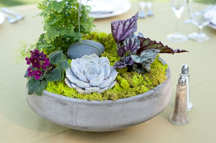 Image result for potted plant centerpieces
