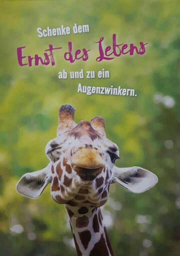 Pin Von Inge Schuster Auf Sprüche Pinterest Humor Quotes Und Funny