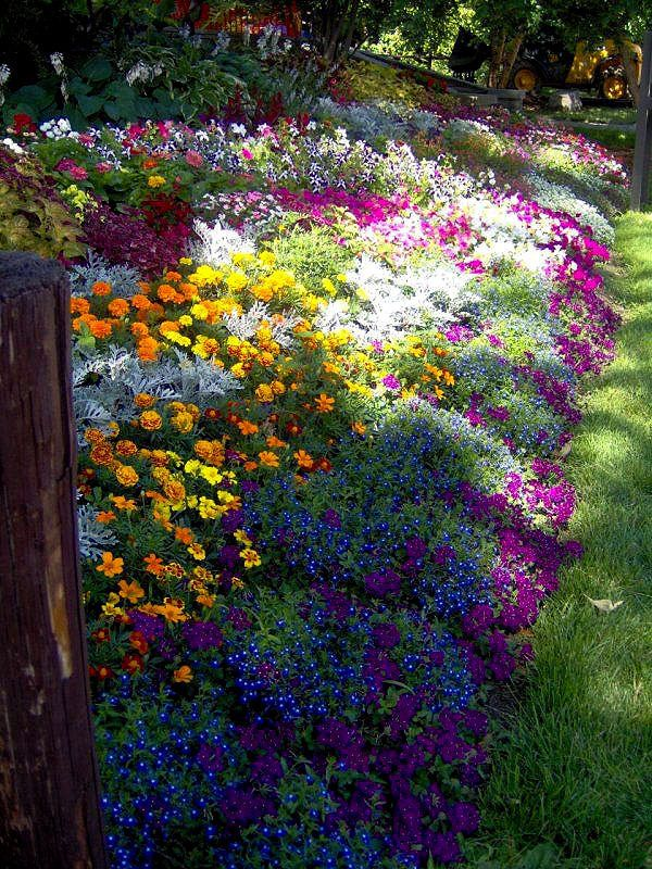 85 best lovely images on pinterest flowers flowers pics for Beautiful flower beds