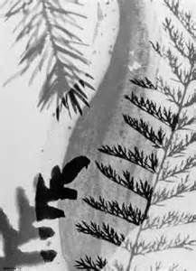 Luigi Veronesi - back-lit leaf arrangement