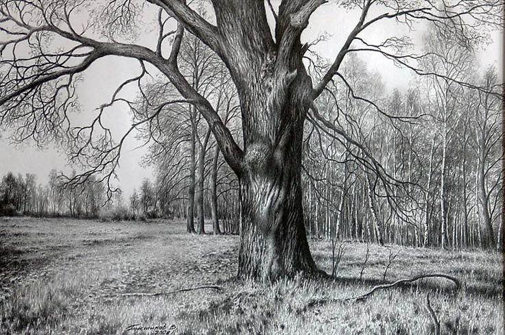 этом разделе дерево в лесу рисунок карандашом наши