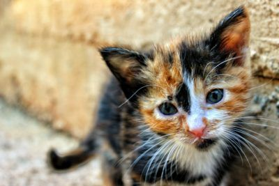 A kitten was stomped to death by a woman in a drunken fit, according to reports. Police say the woman's socks and legs were covered in the poor kitten's blood. Demand that this innocent kitten receives the justice it deserves and that animal abuse is finally taken seriously.