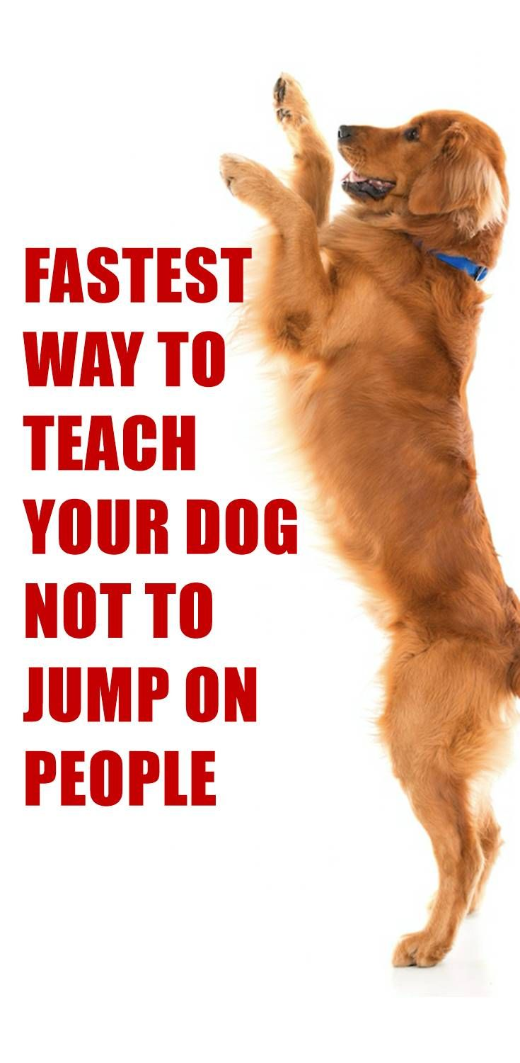 Does Your Dog Jump On People For Many Dogs Jumping Up On People