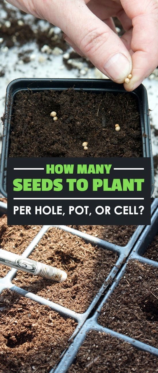 How Many Seeds To Plant Per Hole P*T Or Cell Planting 400 x 300