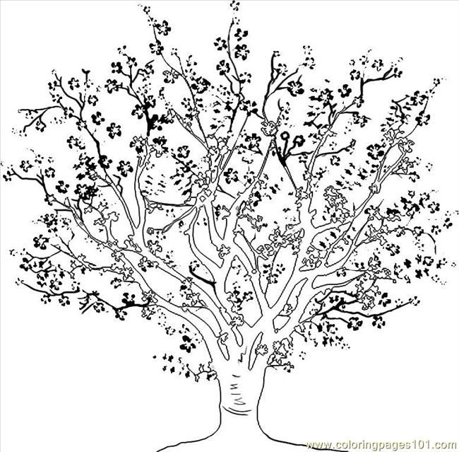 27 best Tree illustrations images on Pinterest Drawings Leaf