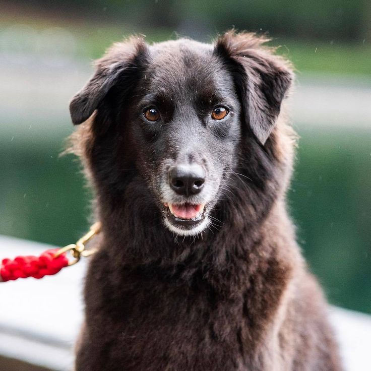 Source Instagram Com Thedogist Jersey Sato 7 Y O Central Park