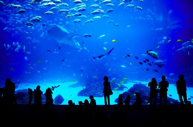 Georgia Aquarium. Get an up close look at exotic marine life, learn about aquatic habitats and check out one of the most diverse examples of oceanic life in the world.