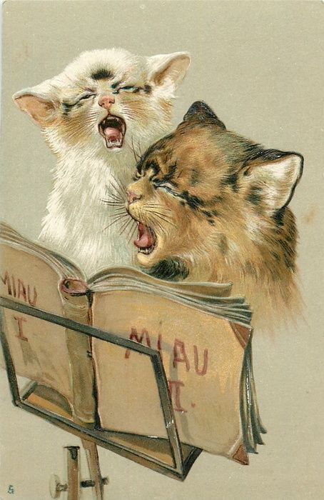 Vintage Singing Cats Postcard They look like they are dying..