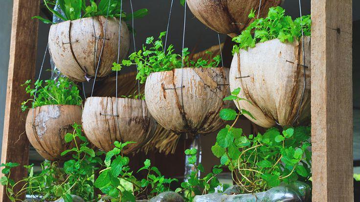 Vasos de Fibra de Coco