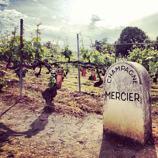 #JPLVMH #Mercier #Epernay Photo by marine_peureux