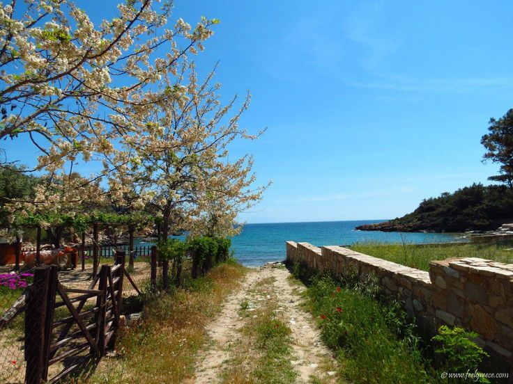 lovely villa with yard and sandy path to the sea in Aliki - beach with two bays and shallow water - Thassos Island