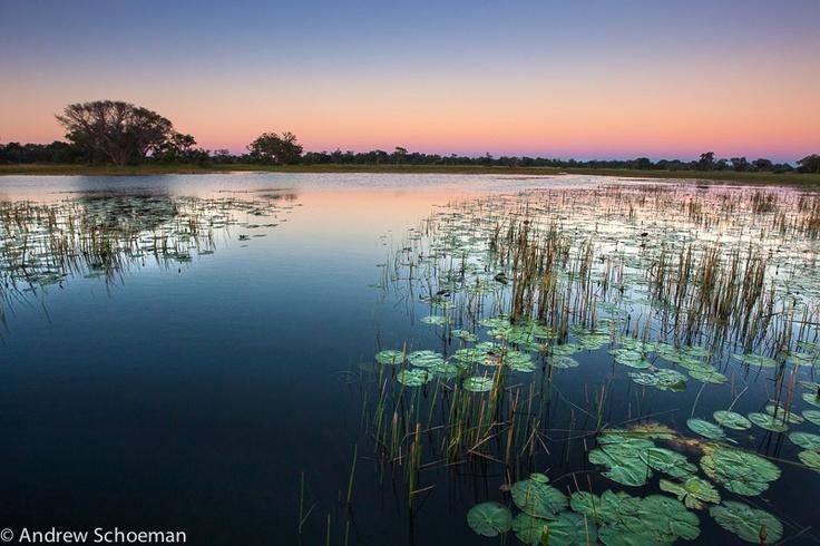 Okavango Delta dawn in Botswana. By Andrew Schoeman.