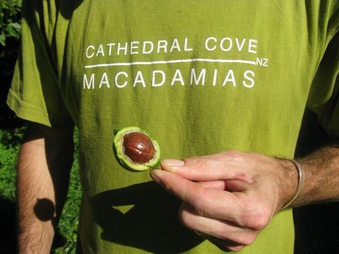 A tiny shop located on a macadamia nut farm nestled on a headland between Hahei and Cooks Beach on the Coromandel Peninsula. With a focus on sustainability & organic production, everything from the physical working environment through to the benefits of the finished goods, has a health & well being focus attached. | #organic cathedralcovemacadamias.co.nz