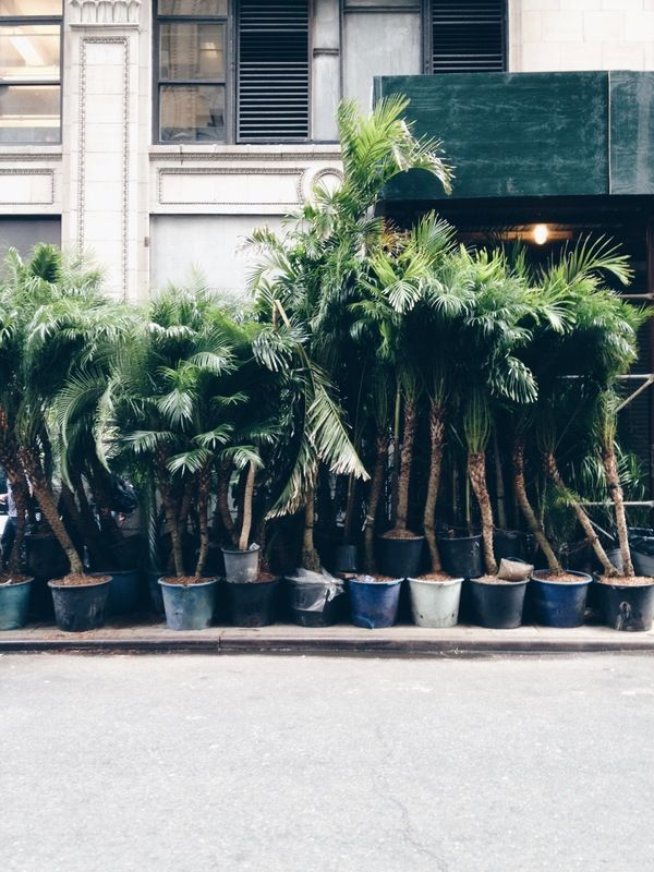 concrete jungle.  | Brooke Torres | VSCO Grid®