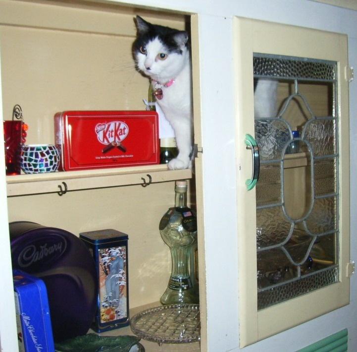 182 Best Kitchen Cats Images On Pinterest