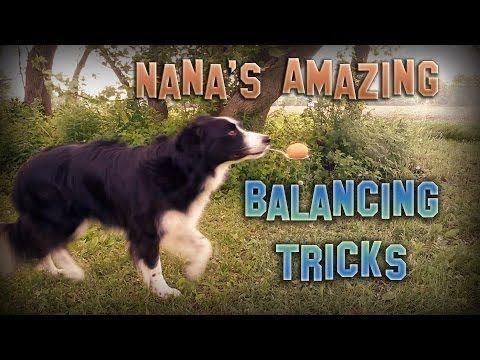 Conheça Collie, A Cachorrinha Equilibrista! | Momentos ternos - TudoPorEmail