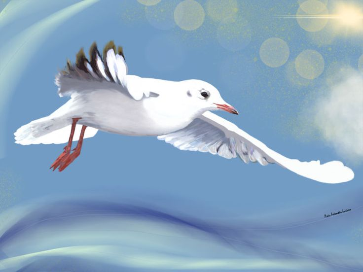 Gabbiano. seagull - Limited Edition Fine Art Print by Maria antonietta  Calabrese on thepixeler.