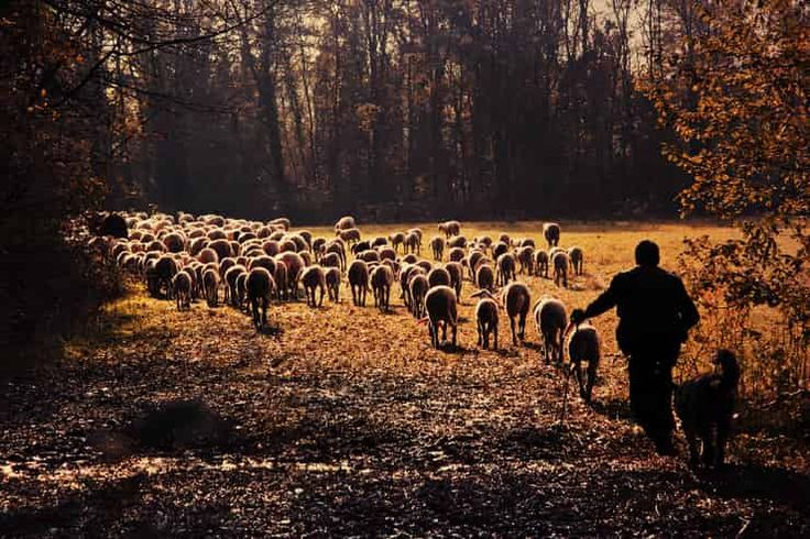 Reflexión sobre el evangelio del día, Jesús el buen pastor.