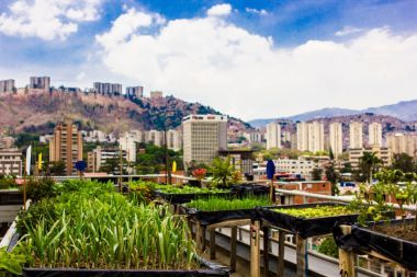 """Venezuela: Urbane Landwirtschaft als """"Produktivitätsrevolution"""" und Regierungsprogramm"""