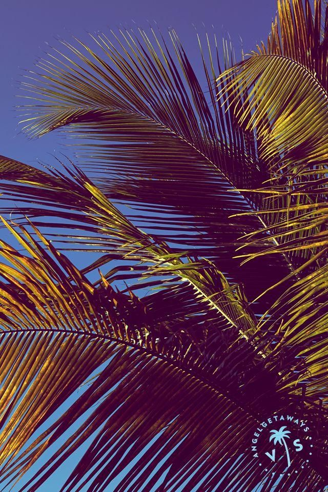Palm trees & clear skies...sigh. Get your desktop, tablet ...