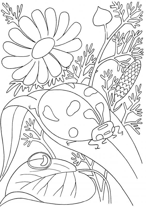Coloring Pages Pdf Insect Coloring Pages Spring Coloring Pages Ladybug Coloring Page