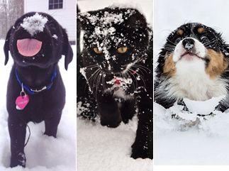 Comme les enfants, les animaux sont tout aussi excités de voir les flocons qui tombent, et leurs premiers pas dans la neige, hésitants pour certains, tout aussi drôles et attendrissants.