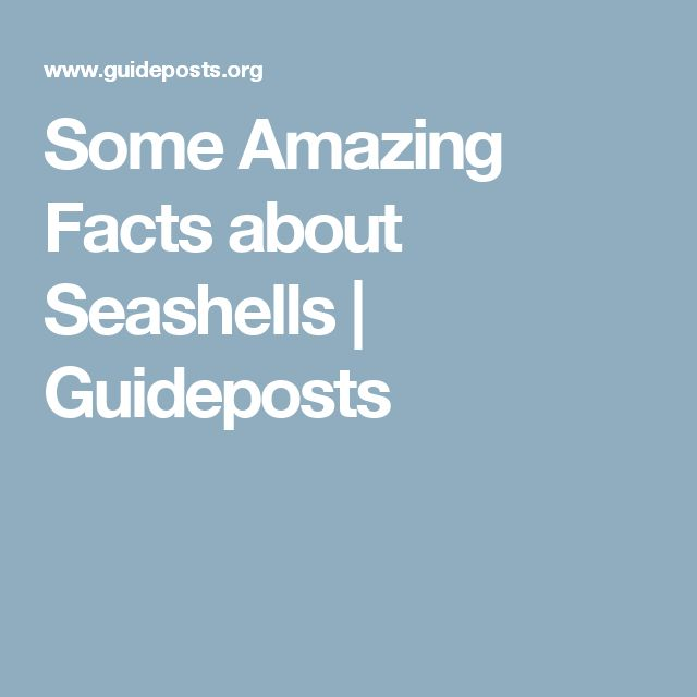Some Amazing Facts about Seashells | Guideposts