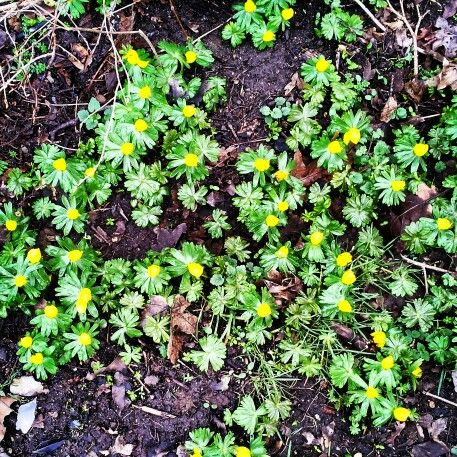 Finally #spring #flowers #nature #yellow #green #morning
