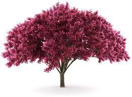 Resultado de imagem para arboles hermosos